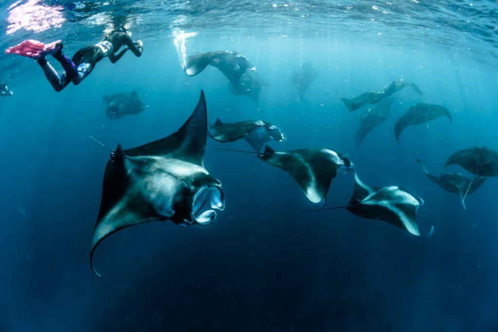 Flores tour is a heaven for scuba diving enthusiast