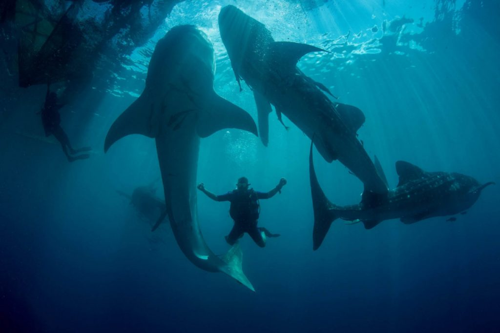 Papua Diving in Cendrawasih National Park